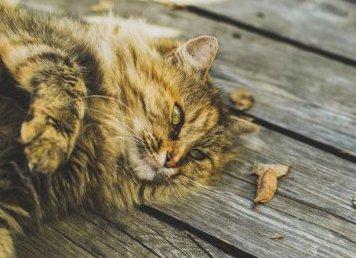 Kot w obiektywie - jak robić zdjęcia kotom?