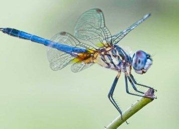 Jak fotografować owady?