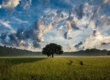 Natura w obiektywie. Jak robić dobre zdjęcia?